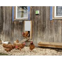 Kerbl-Automatisierung für automatische Hühnerstalltür
