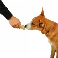 Groins de Porc à l'unité pour chien DAILYS