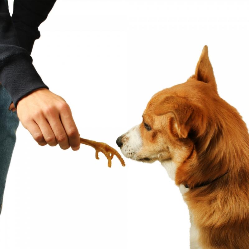 Dailys Pattes de Poulet à l'unité pour chien