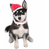 Déguisements pour chien