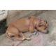 GRAU-Poudre-de-graisse-de-bouf-naturelle,-apport-energetique-pour-chien-et-chat_de_Valerie_16167262460efc9b0ad5bc5.13336553