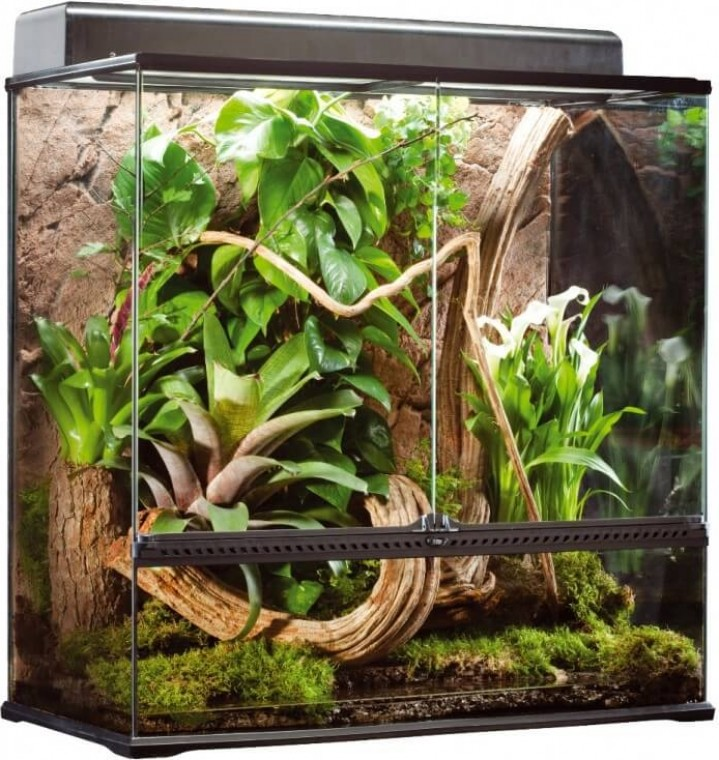 Natural Terrarium Large Advanced Reptile Habitat