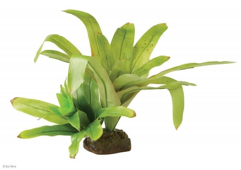 Plante brom lia d coration for Plante bromelia