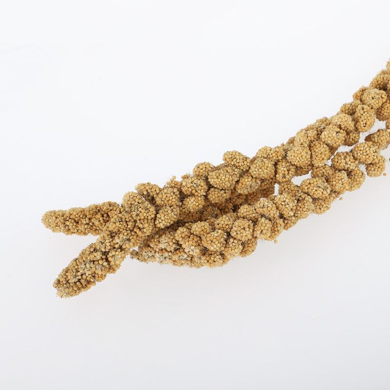 iako millet jaune naturel caractéristiques