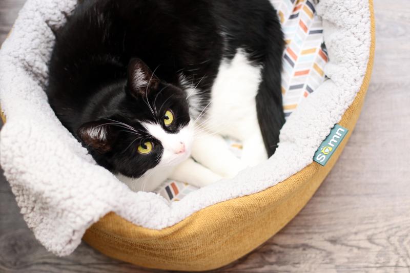 Cestino ovale con orecchie per gatti e cani di piccola taglia TYROL