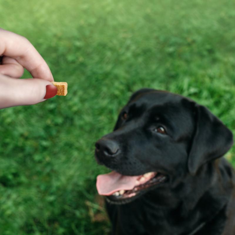 IAMS Naturally friandises pour chien adulte 100% viande sans céréales