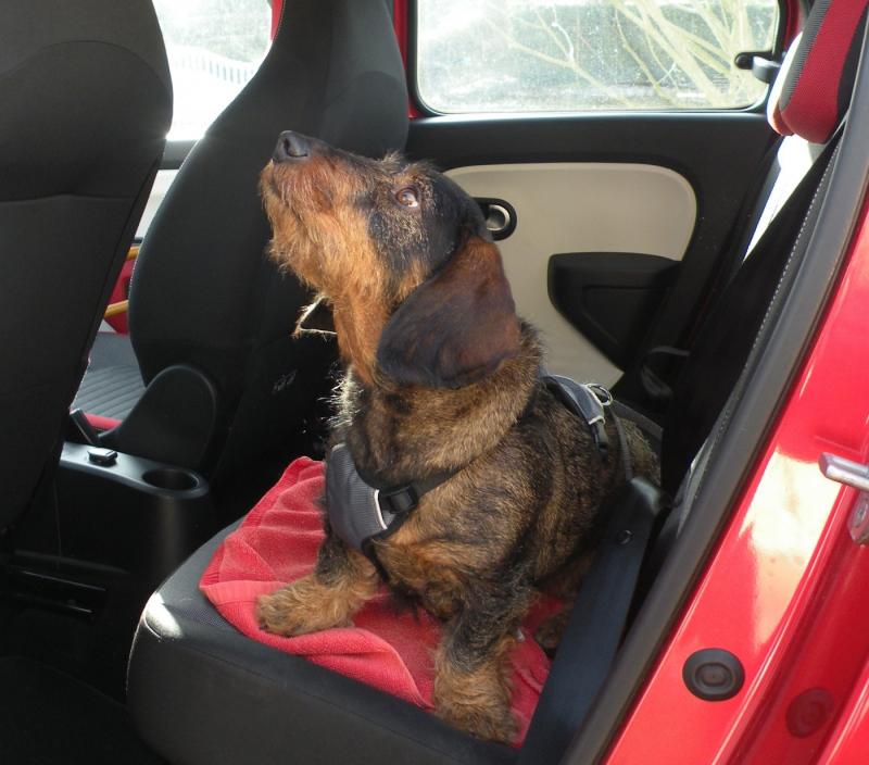 Arnés de seguridad coche para perro