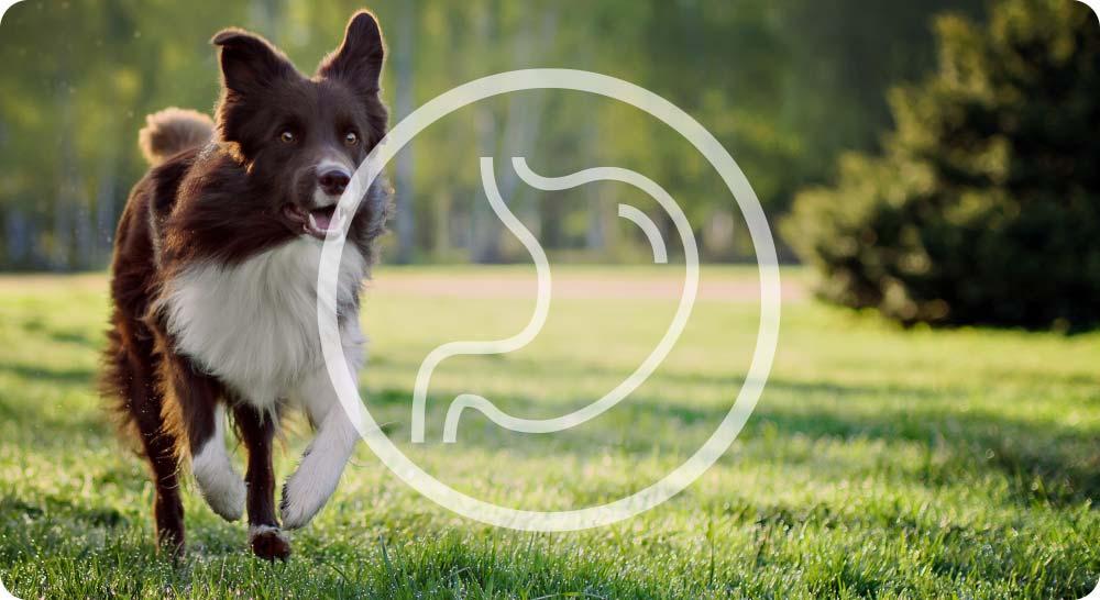 chien en bonne santé