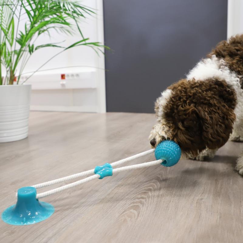 Jouet avec ventouse pour chien