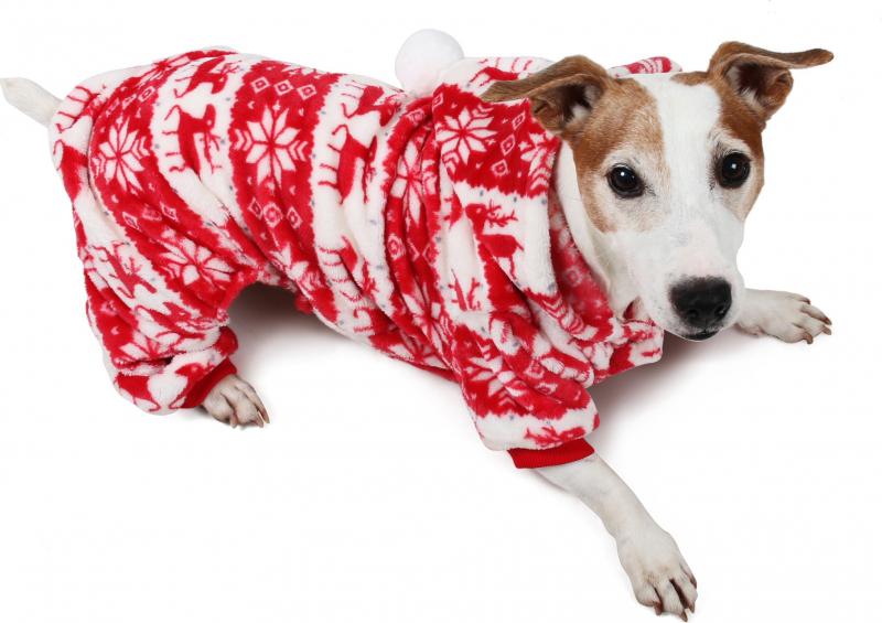 Pull pour chien Pyjama d'hiver Zolia