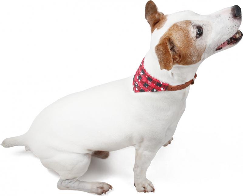 Collier pour chien avec Bandana pour chien Noël Zolia