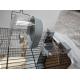 Duvo+-cage-pour-oiseaux-Eliza---75cm_de_Killian_1042058893602002f6a32d87.35569694