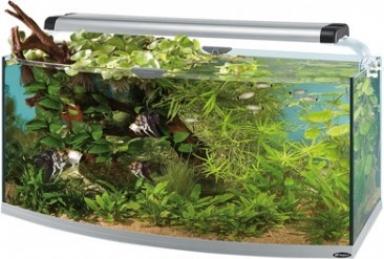 Aquarium cayman 110 open scenic 300l aquarium et meuble for Aquarium ouvert