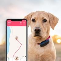 Traceur Tractive GPS DOG pour chien