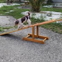 Rampe bascule agility Flip ZOLIA