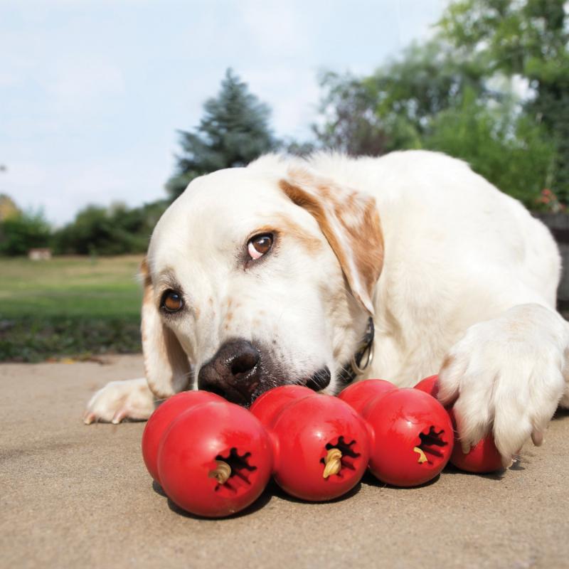 Jouet pour chien KONG Distributeur de Friandises Goodie Ribbon - 3 tailles disponibles