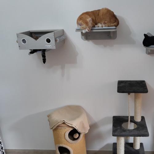 avis graziella arbre à chat mural hooky