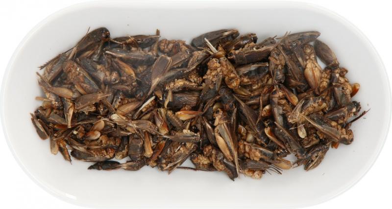 IAKO getrocknete Grillen für Reptilien und Insektenfresser