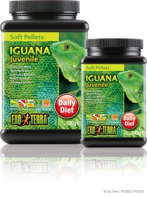 Gecko/Iguane