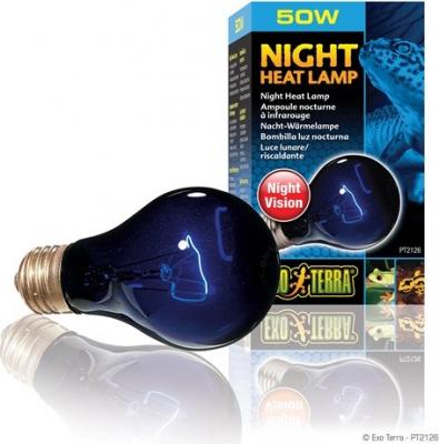 Ampoule nocturne