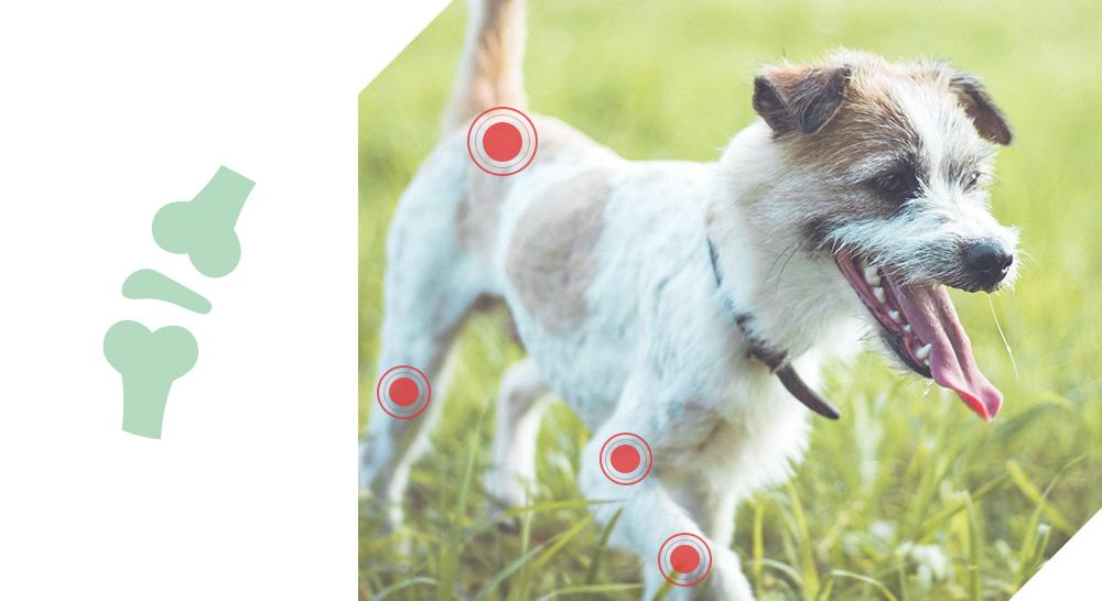 croquettes enrichi super ingredients Quality sens pour chiens