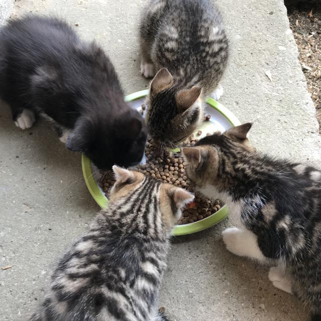 avis fabrice croquettes quality sens kitten