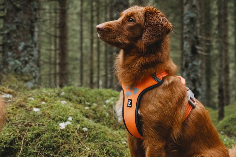 Harnais WEEKEND WARRIOR rembourré pour chien Hurtta Orange Fluo