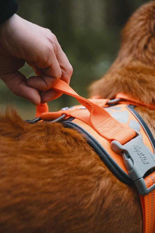 Arnês WEEKEND WARRIOR forrado para cães Hurtta Laranja Fluo