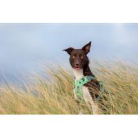 Arnés WEEKEND WARRIOR relleno para perro Hurtta Verde Camuflaje