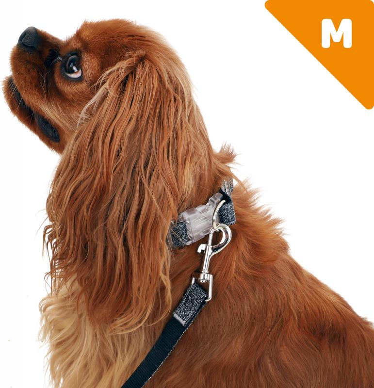Collier pour chien Ecopetly de Zolia - plusieurs tailles disponibles