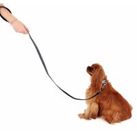 Laisse pour chien Ecopetly de Zolia