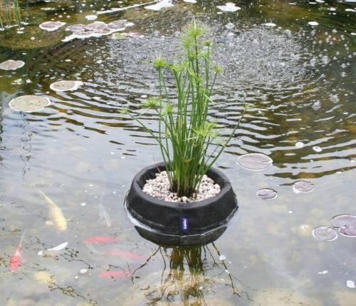 Accessoires pour plantes de bassin for Accessoire bassin
