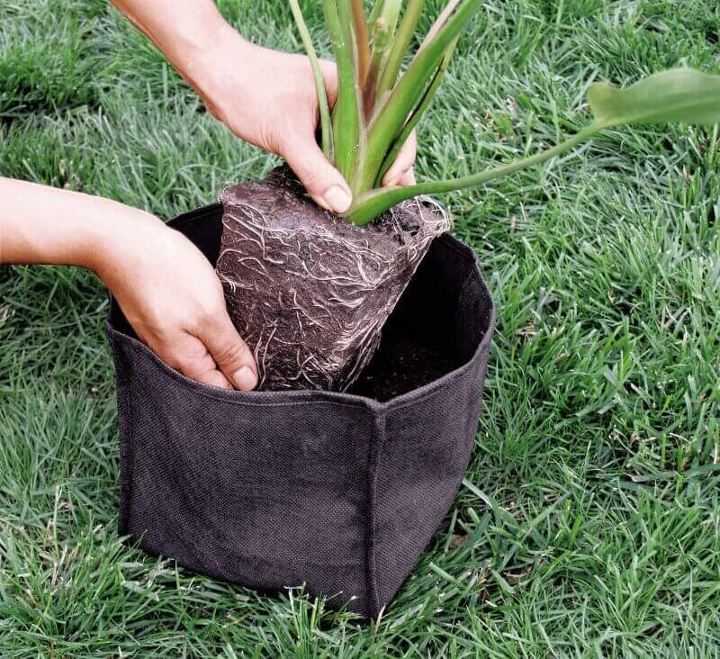 Panier souple pour plantes accessoires pour plantes for Achat plante bassin