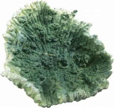 Décoration en résine - Corail vert