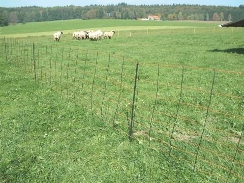 TitanNet valla de seguridad para ovejas con estabilizador vertical
