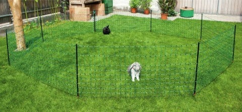 Filet lapins