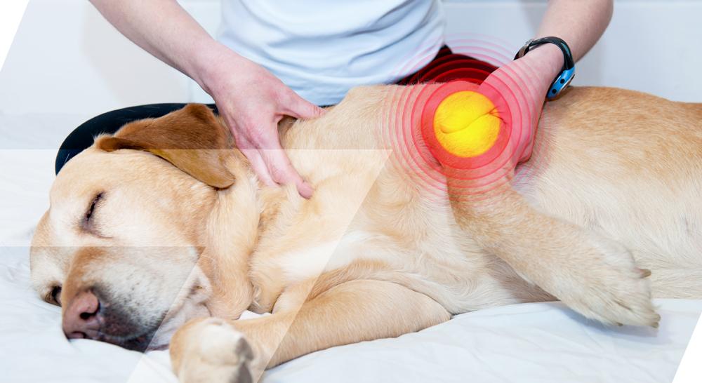 articulation douloureuse