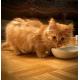 89163_Royal-Canin-Gastro-intestinal-chaton_de_CATHERINE_6483943176037eda35a33a5.99834593