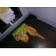 89163_Royal-Canin-Gastro-intestinal-chaton_de__16281827696037f1a0877382.48663158