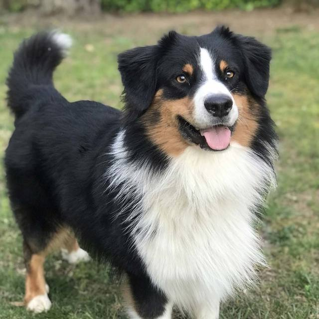 chien client zoomalia