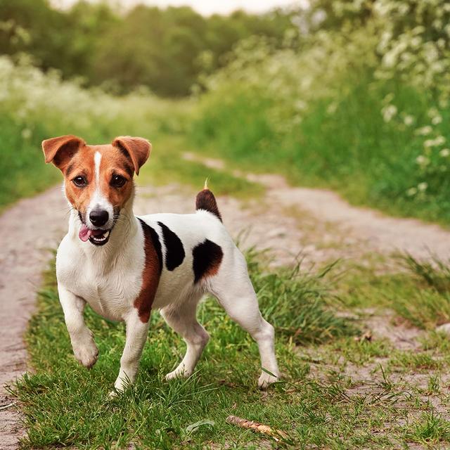 chien cliente zoomalia