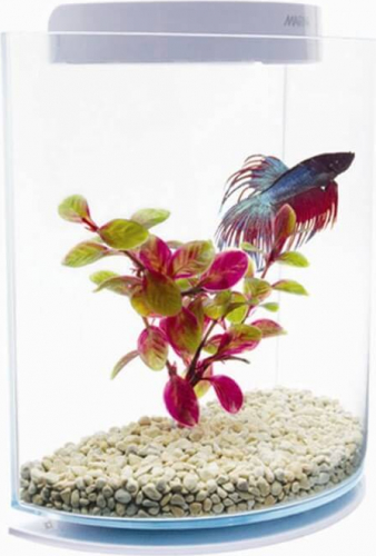 Betta kit Half Moon