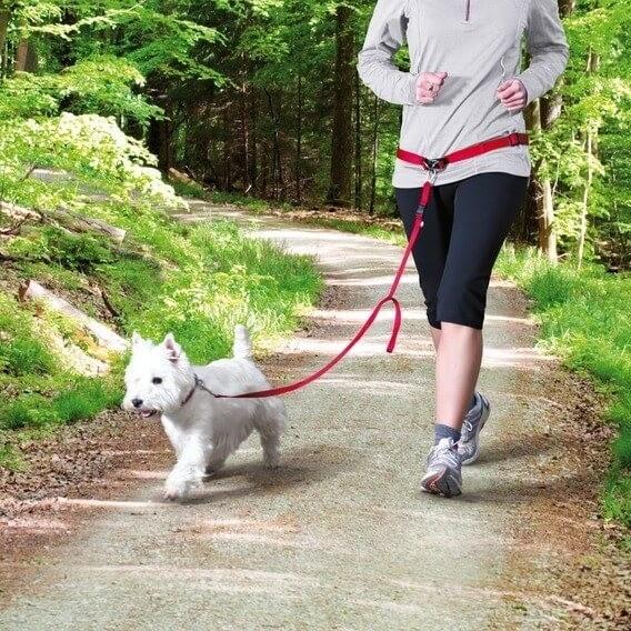 Ceinture ventrale avec laisse pour chiens de petite et moyenne taille