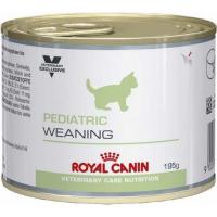 Alimentation pédiatriques pour chaton