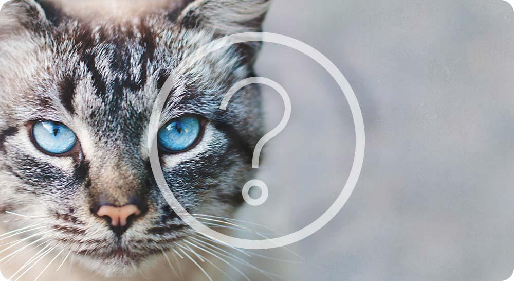 optimus pochon viandes poissons pour quels chats
