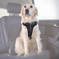 Harnais sécurité pour chien Dog Protect