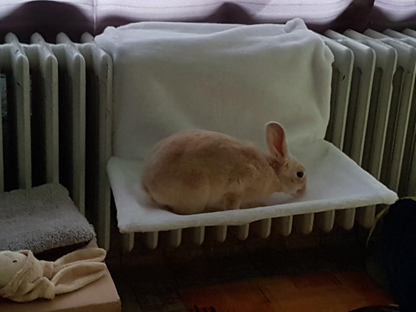 lit hamac radiateur pour chat deluxe couchage pour chat. Black Bedroom Furniture Sets. Home Design Ideas
