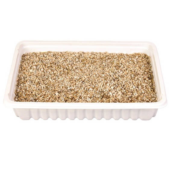 Cat grass seeds catnip and cat grass - Herbe a chat ...
