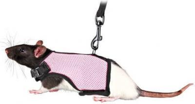 Harnais pour furet/Rat