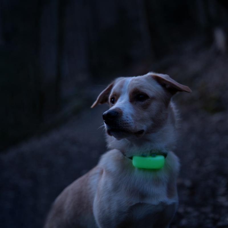Tractive GPS DOG 4 - Traceur GPS pour chien avec suivi d'activité